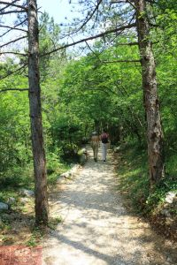 Прогулочная дорога в парке