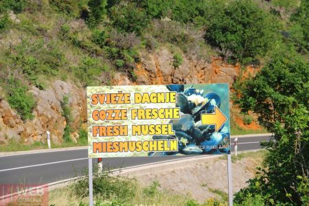 Реклама - продажа устриц