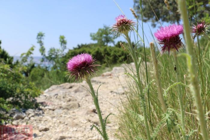 Цветы на тропе