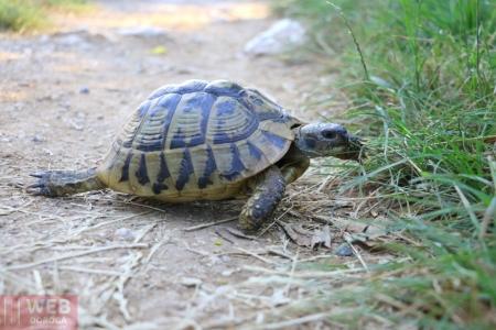Черепаха в Национальном Парке