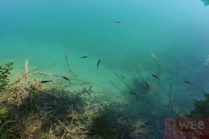 Подводный мир в озерах