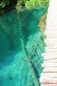 Дорожка и мертвое дерево в воде