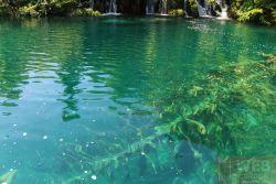 Плитвицкие озера - озеро и дерево