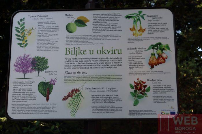 Информация по растениям в парке
