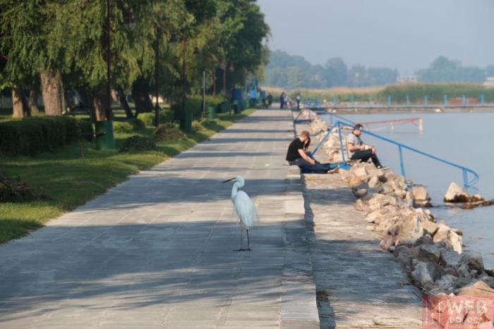 Набережная Шиофок недалеко от центра - гуляют дикие птицы