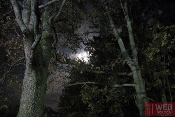Роща в Косино ночью