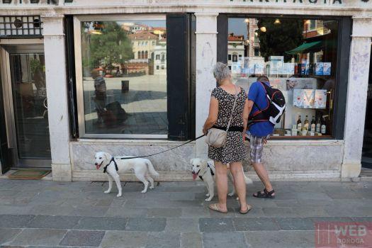 В Венеции рады собакам
