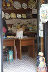 Венеция - коты наступают