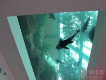 Аквариум над головой - Морской Музей Вены