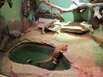 Террариум в Морском Музее Вены
