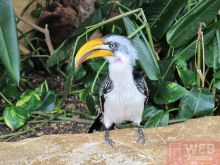Птицы вокруг в помещении Морского Музея