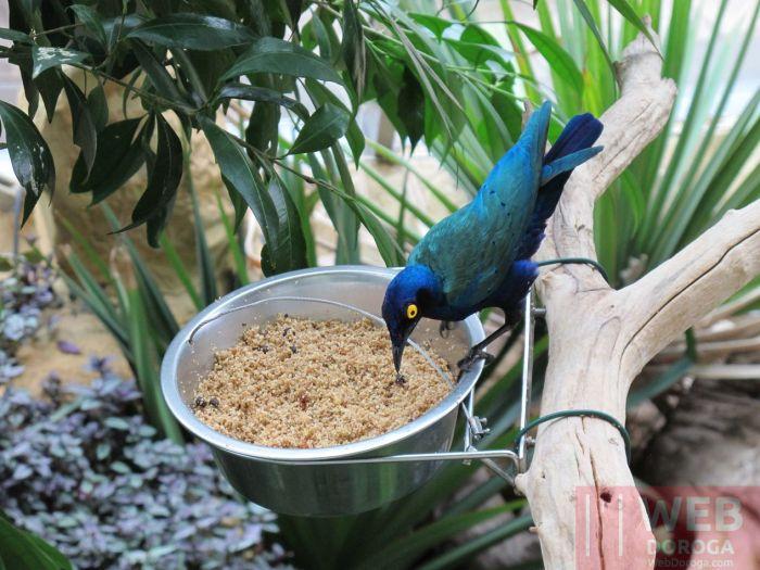 Кормушка птиц в холле музея