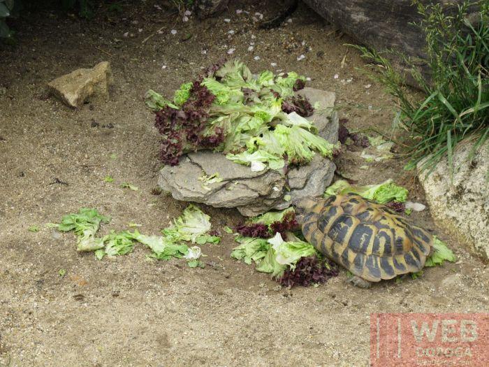 Черепаха - вегетарианец