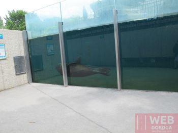 Морской бассейн - вид сбоку с местным жителем в зоопарке Шёнбрунн
