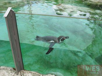Открытый бассейн для пингвинов