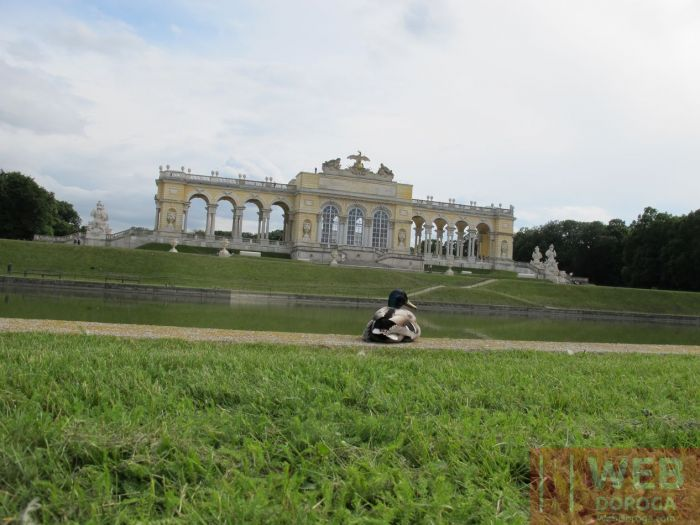Шёнбруннский дворец в Вене - утки наступают