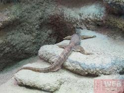 Зоопарк Шёнбрунн - террариум
