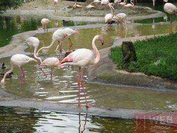 Фламинго в зоопарке Шёнбрунн