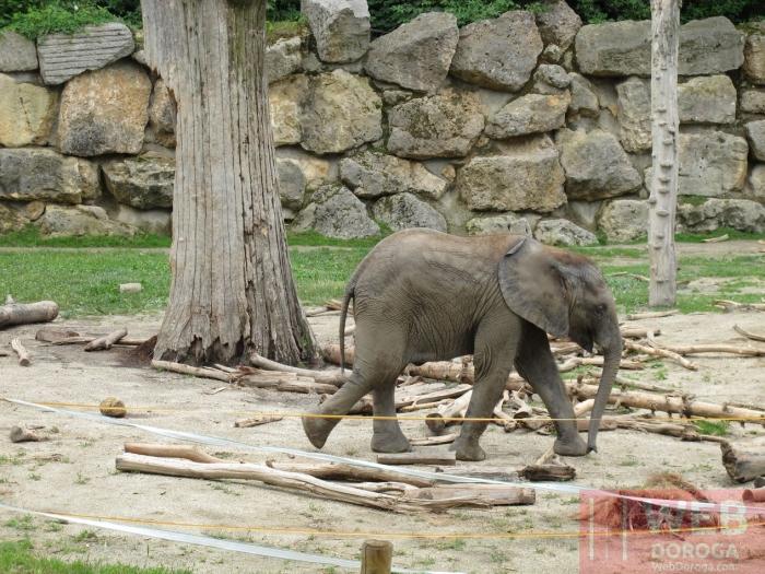 Слоники в Шёнбрунн