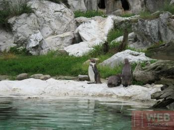 Вальер для пингвинов