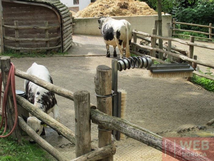 Народные звери- чесалка для коров