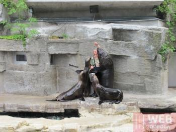 Публичное кормление животных в зоопарке