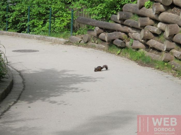 Белки тоже попрошайничают у посетителей